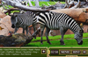 Lost at the Zoo Zebras Scene. Surface Pro. Actual image is higher resolution.