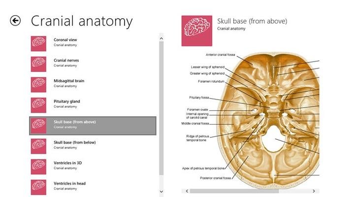 Cranial anatomical images