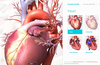Learn more about human anatomy