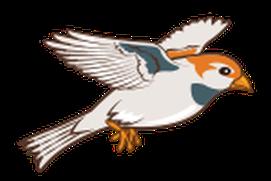 Flap, Birdie, Flap!