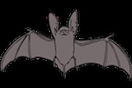 Feed The Wild Bat