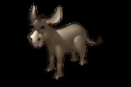 Donkey Card Game