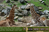 Lost at the Zoo Giraffes Scene. Surface Pro. Actual Image is Higher Resolution.