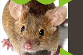 Humane Pests Repeller
