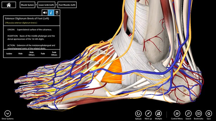 Essential Anatomy 3 for Windows 8