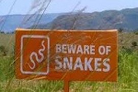 Be'Aware' Of Snakes