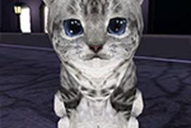 Kitten Rush
