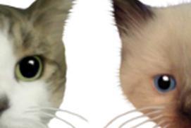 Kitty Popper