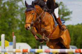 Horse Racing 3D Jump Simulator