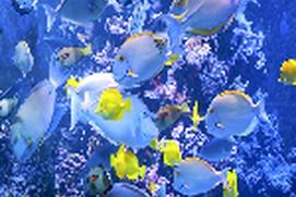 Aquarium Memory Game