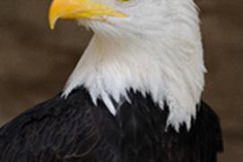 Eagle Spy Club