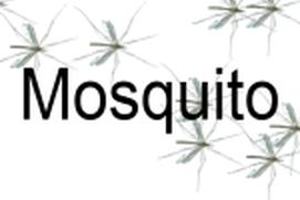 Mosquito Tick