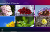 WallMusicHD: Beautiful Flower Free for Windows 8