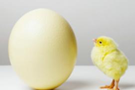 预防H7N9禽流感攻略
