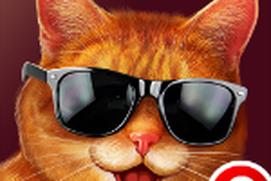 Cat Simulator New