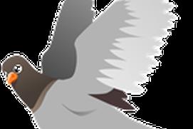 All My Pigeons