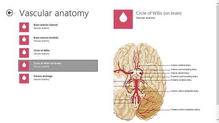 Vascular anatomical images