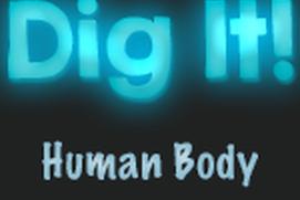 Dig It: Human Body