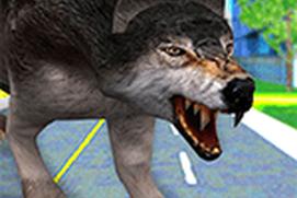 Wild Dog Rescue Wolf