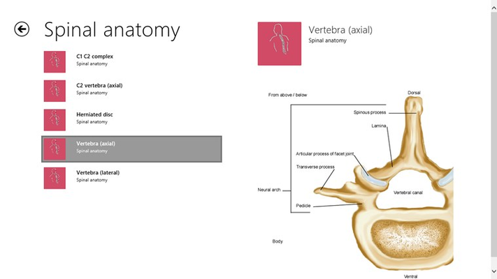 Spinal anatomical images