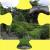 Japanese garden - Kew, London Jigsaw Puzzle