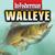 In-Fisherman Walleye Guide