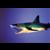 MustHaveIt Shark Bait