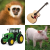 Animal, Instrument & Vehicle Sounds