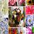 Best Flowers in World