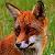 Fox & Hounds
