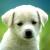 The Canine Catalog