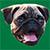 Dogifyer