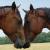 I Wanna Horse