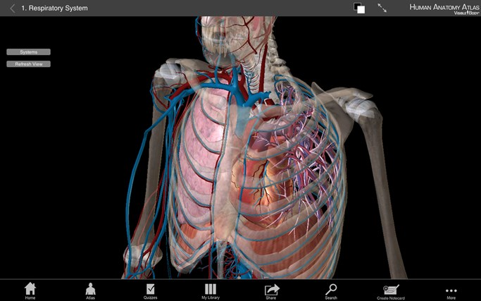 Human Anatomy Atlas 3d Anatomical Model Of The Human Body Guide