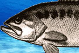 Fish Match 8