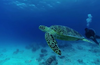 Watch a turtle in the ocean by controlling the video camera.