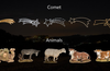 Comets and Animals