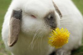 Daily Bunny