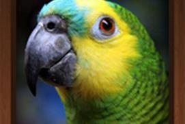 Bird Calls - Free : 4500+ Bird Sounds, Bird Songs, Bird Identification & Bird Guide