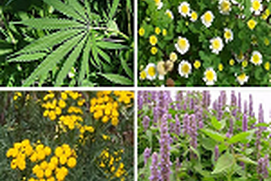 Medicinal Plants for your garden