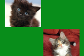 Match the Kittens Puzzle