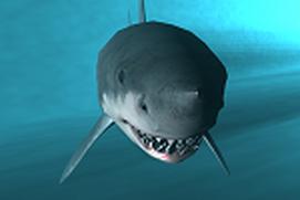 Sharks Photos