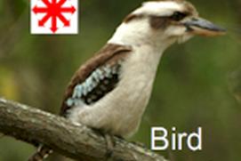 Bird Oceania