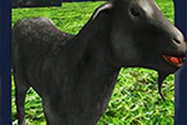 Goat Smash