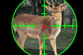Deer Hunt Sniper Season