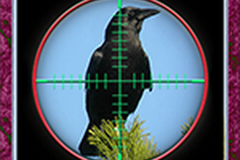 City Crow Hunting 3D