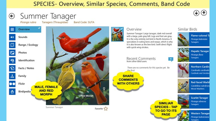 Species Overview: description, similar birds and customer commentary