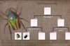 Explore classification systems and dichotomous keys in greater detail.