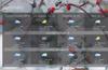 Summary forecast view