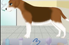 dog pregnancy surgery for Windows 8